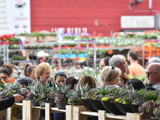 Succulents and many flowers and plants during Flower Day 2018 at Eastern Market in Detroit.
