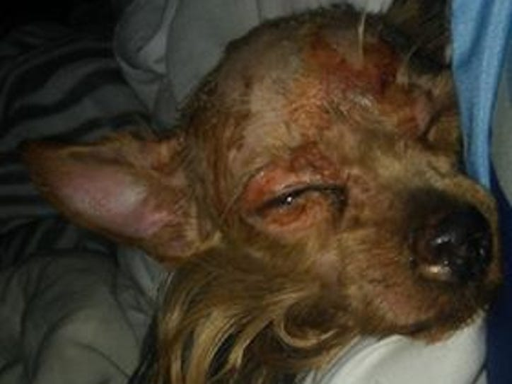 Bitty Boo was reportedly sprayed with hot water before
