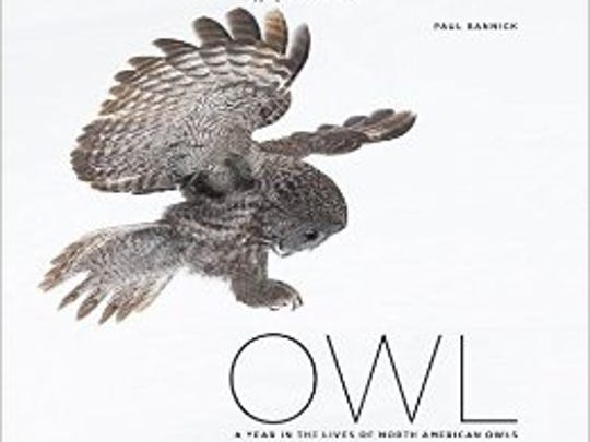 """""""Owl,"""" by Paul Bannick"""