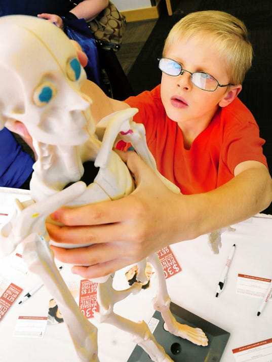 Kaleb Lamb of Las Cruces takes a close look at a skeletal model at the Massage Therapy Training Institute booth during the 2014 Health and Fitness Expo. This year's expo will run from 9 a.m. to 4 p.m. Saturday at the Las Cruces Convention Center.
