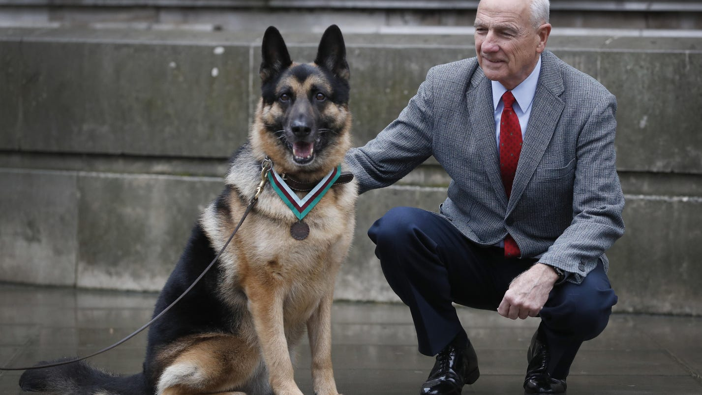US Army hero dog during WWII receives posthumous medal