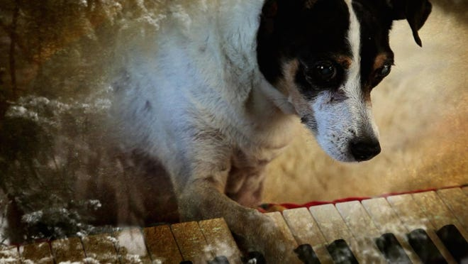"""Heart of a Dog"" will be screened Friday as part of ""An Evening with Laurie Anderson (on screen, that is!)"" at Cornell Cinema."