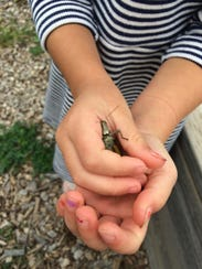Spend the day catching grasshoppers and exploring at