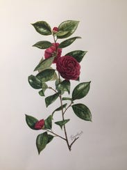 Camellia illustration, created by Jean Putnam Hancock.