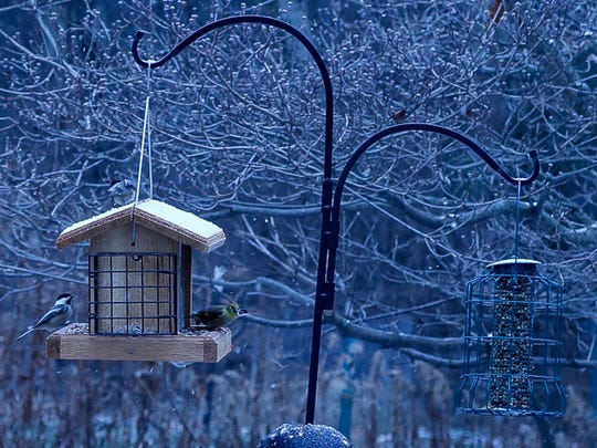 Birds flock to a feeder in Jody Enck's backyard. Enck, president of the Cayuga Bird Club, headed an effort this year to document all the species of birds in a 15-mile radius, stretching from Dryden to Enfield.