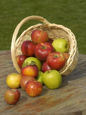 Apples will keep longest stored at 32-40 degrees.