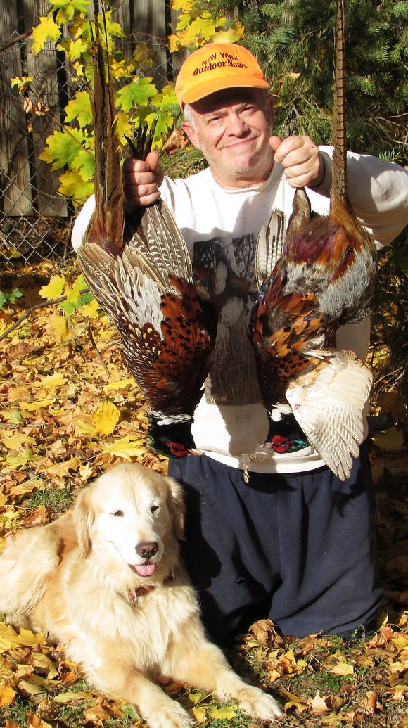 Harlow helped me find one of the two pheasants I bagged