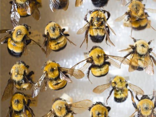 BUR 0826 bees 5