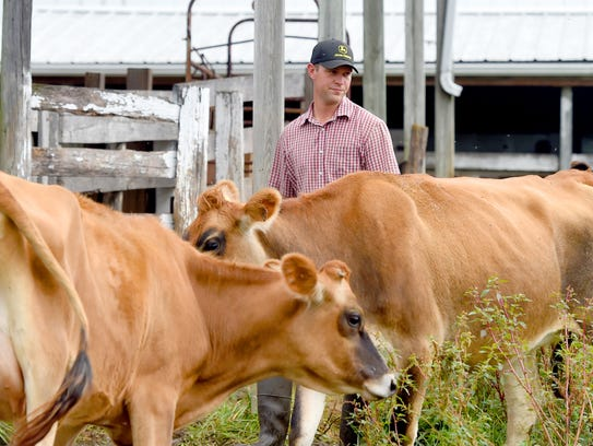 Benjamin Beichler walks among pregnant dairy cows at Creambrook Farm in Middlebrook on Wednesday, Sept. 13, 2017.