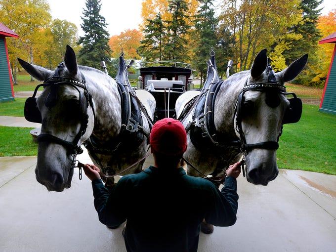 Ryan Lieblang holds a team of percheron horses at the