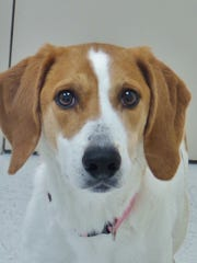 Sandy is a 6-year-old hound mix who can be a real shy