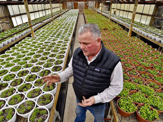 Chris Conant, co-owner of Claussen's Greenhouse in Colchester, seen on Feb. 26. Claussen's is being audited back to 2011 to possibly pay a 6 percent tax on items he thought were exempt from the use tax.