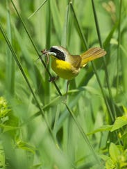 Both common and rare species flock to the Wetland Wonders