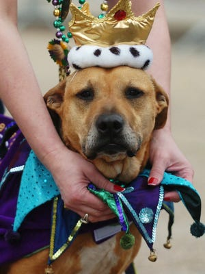 The Krewe de Chiens parade will be held Saturday.