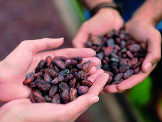 Cacao plants, necessary for chocolate, can only grow