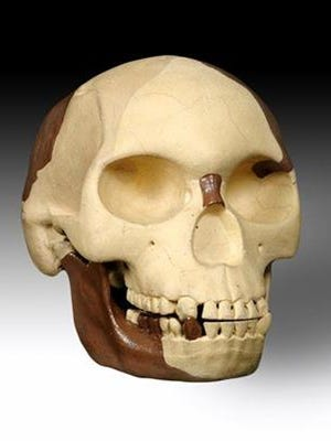 This is an undated image released by the Natural History Museum of the skull of Piltdown Man.
