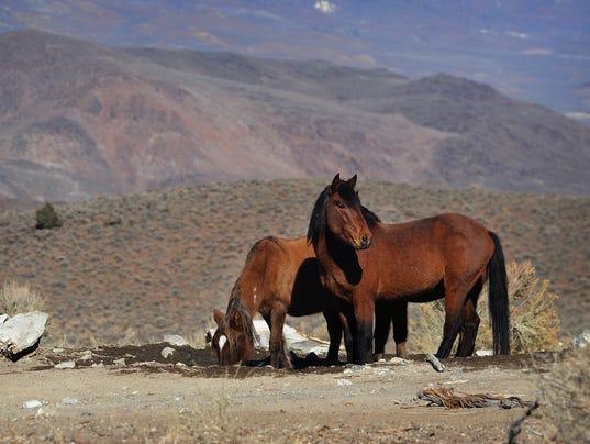 wild-horses-012815-2