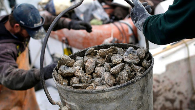FILE - In this Dec. 20, 2013 file photo, oysters are unloaded on Deal Island, Md. Researchers outlined in a report published in February 2017, that a new strain of disease-causing bacteria has been found thriving along the Atlantic Coast which can contaminate oysters or other shellfish.