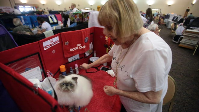 Donna Isenberg of Culver City prepares Insanity, her blue point himalayan persian to show at the Valley Empire Cat Club and Cat Fanciers' Association Cat Show on Saturday.