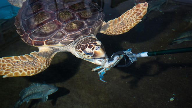 Navarre Beach Sea Turtle Conservation Center is facing funding questions from Commissioner Rob Williamson.