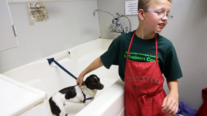 Kyler Burrell washes Puddles during a previous Junior Trainers Camp at Willamette Humane Society. In the camps offered each summer, middle-school age campers work with shelter dogs for four days on one-on-one training and care.
