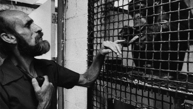 """Paul Fritz Primate Foundation of Arizona co-founder of what is popularly known as the """"Monkey Farm"""" in northeast Mesa is seen in 1976 with Pedro, one of the foundation's charges. Readers share memories of the unique chimpanzee sanctuary."""