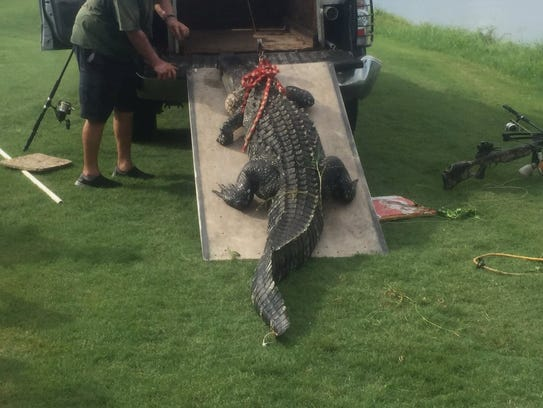 The alligator that bit a man in South Florida Friday.