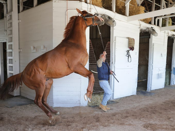 Kentucky Derby contender Justify rears up while walking