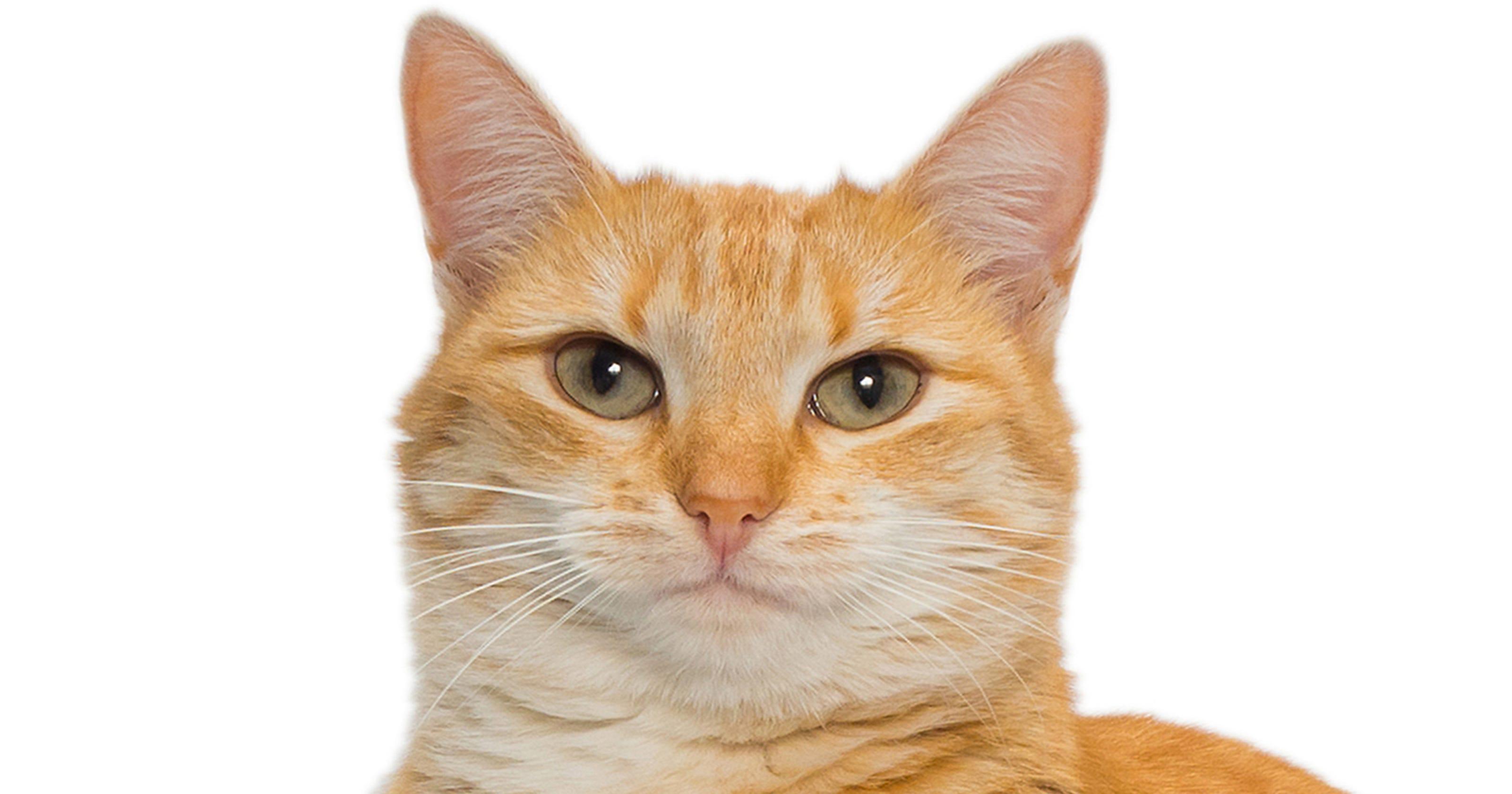 Serial cat killer suspected in Washington, at least 13 ...