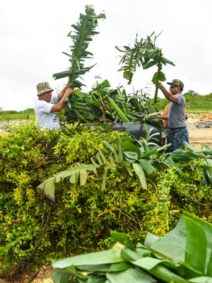 Customers, Marcos Mallari, left, and Larry Danny, unload a pickup load of green waste at the Northern Hardfill in Yigo on Saturday, July 7, 2018. Mallari said the vegetation was a result of the destruction created during the passage of Tropical Storm Maria. Green waste, wood, cardboard and certain construction debris are accepted at the facility but there a fee is charged based on the amount of material being disposed of.