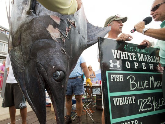 Lawrence Julio's blue marlin weighs in at 723.5 pounds late on the final day of the White Marlin Open in Ocean City in 2014.