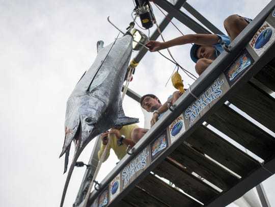A white marlin is weighed at Ocean City's White Marlin