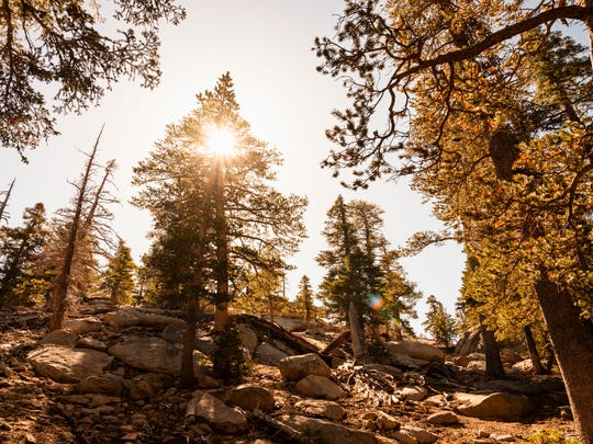 "The view from Round Valley ""Loop"" trail in the San Jacinto Wilderness"