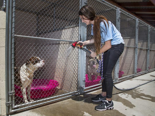 Volunteer Amanda Hicks hoses down the kennels at the Maricopa County Animal Care and Control Phoenix location, Wednesday, June 28, 2017.  The 5th of July is the busiest day for intakes for many shelters because of all the dogs who run away after being spooked by fireworks.