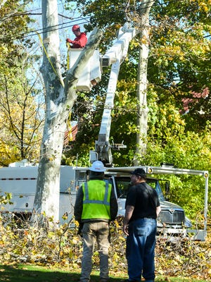 Workers from Complete Clearing Inc. begin the process of removing the sycamore trees along Greenwood Street on Thursday.