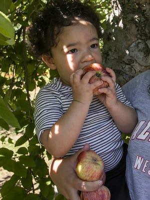 Azure Christian, 18 months, of Dighton bites into an apple she picked at C.N. Smith Farm in East Bridgewater on Sunday, Oct. 4, 2020.