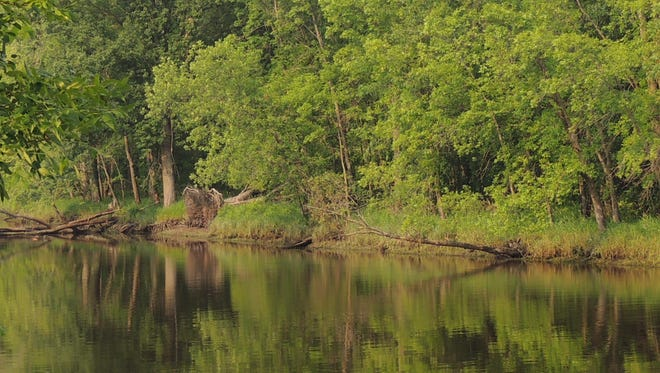Shoreline trees cast reflections in the still waters of the wild Wolf River.