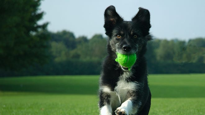The easiest way to get your pet in shape is through play. It might even help you shed some pounds.
