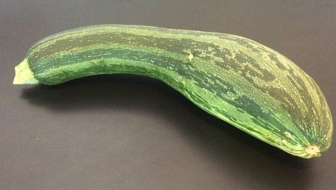 The humble zucchini from Jonathan Meyerhoff's garden.