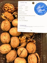 Lester Martin Jr. of Willow Hill won six prizes for edible nuts, including four first places for English walnuts, pictured.