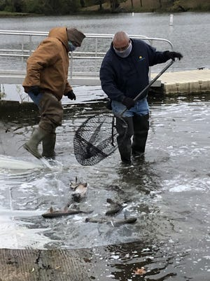 Workers from Ava, Mo.-based Crystal Lake Fisheries carry out nets full of rainbow trout during a stocking last October at Lake Shawnee. The Missouri fishery will return to Topeka to stock the lake a second time Feb. 26, with the lake closed to fishing until 6 a.m. March 5.