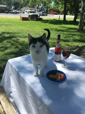 Animals like Spot, the Ottawa County Humane Society mascot, will benefit from an upcoming fundraiser at 1812 Food and Spirits.