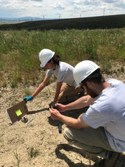Camile Waters and Chuck Taylor, science technicians with Montana Fish, Wildlife and Parks, document a bat carcass they found at Spion Kop wind farm.