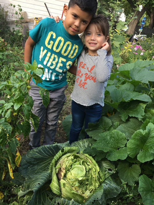 636402918921630764-cabbage-contest.JPG