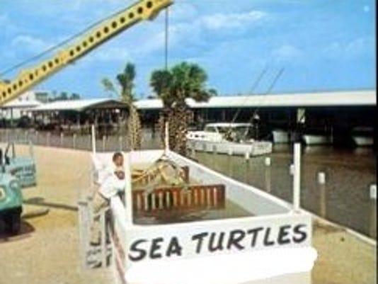 636639858834868285-Sea-Turtles.jpg