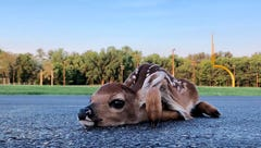 Don't hover: Parents are monitoring their wildlife babies