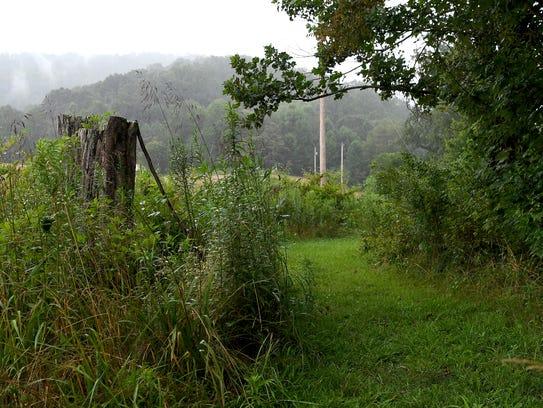 A dead tree marks the trailhead of Bailey Mountain