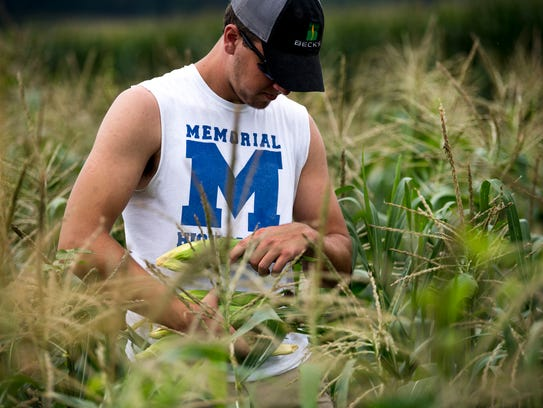 Frank Durchholz harvests sweet corn at his family's