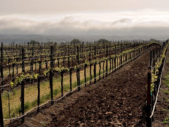 A view during a foggy day at Cass Vineyard & Winery