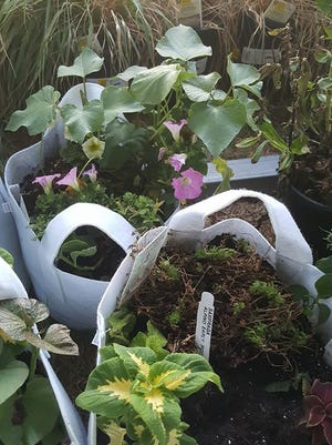 """All 1 gallon to 15 gallon living arrangements are offered in """"grow bags."""""""
